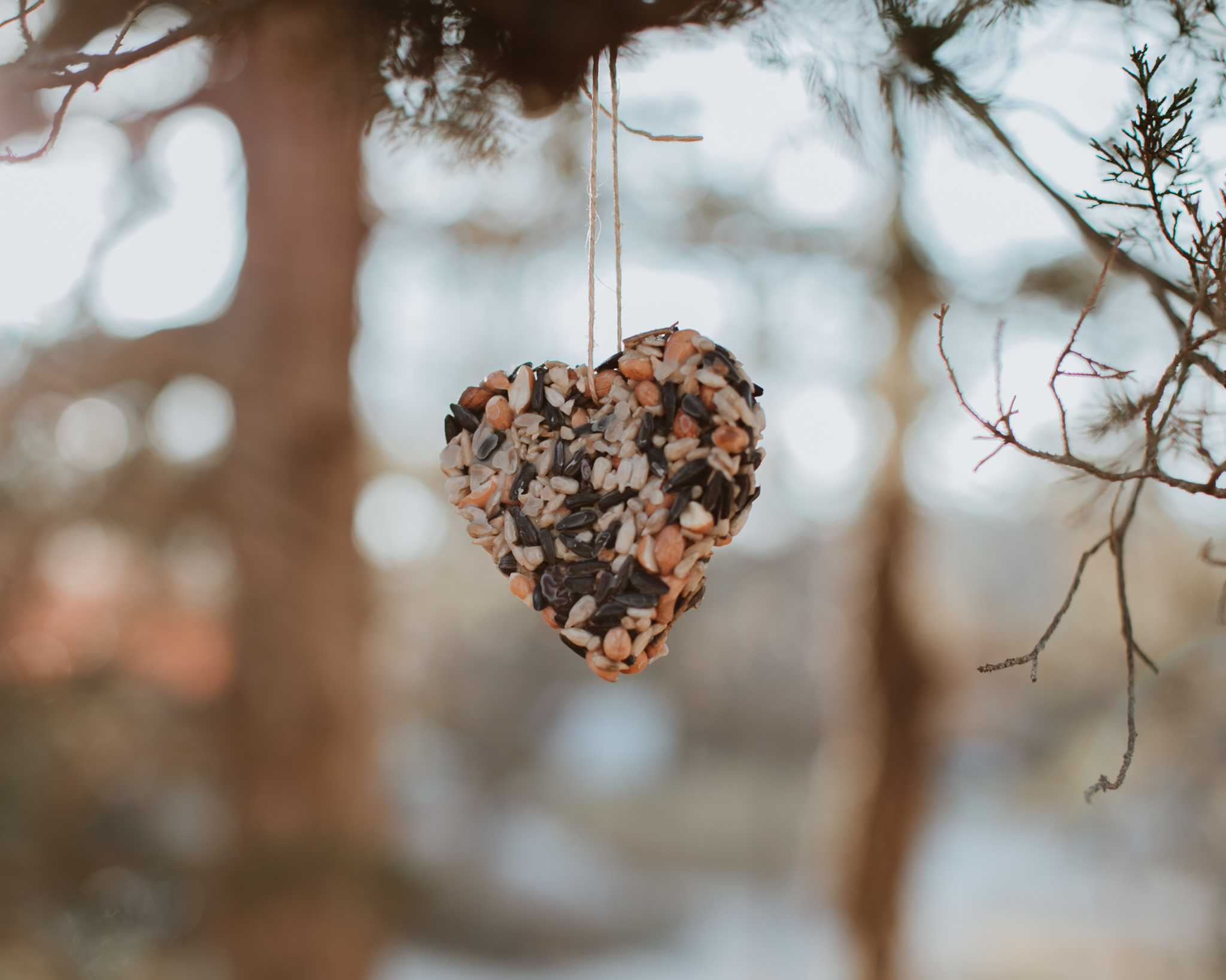 A bird seed ornament in the shape of a heart hanging on a tree.