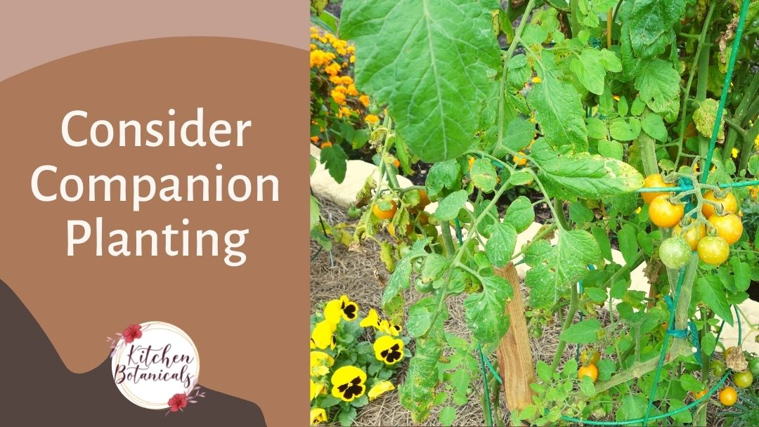 consider companion planting when growing vegetables in Florida - Kitchen Botanicals