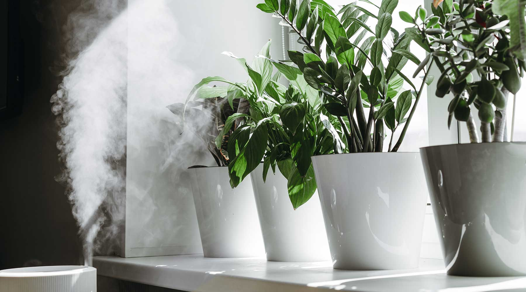 Humidifier providing steam for a row of houseplants on a window sill with sunlight streaming in.