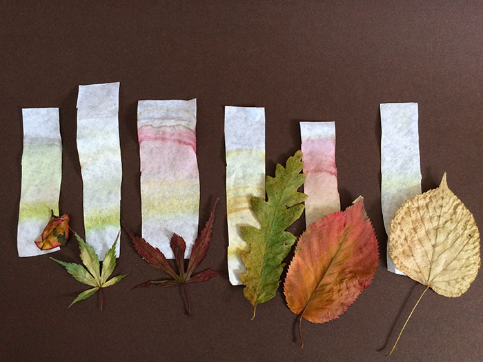 Chromatography results