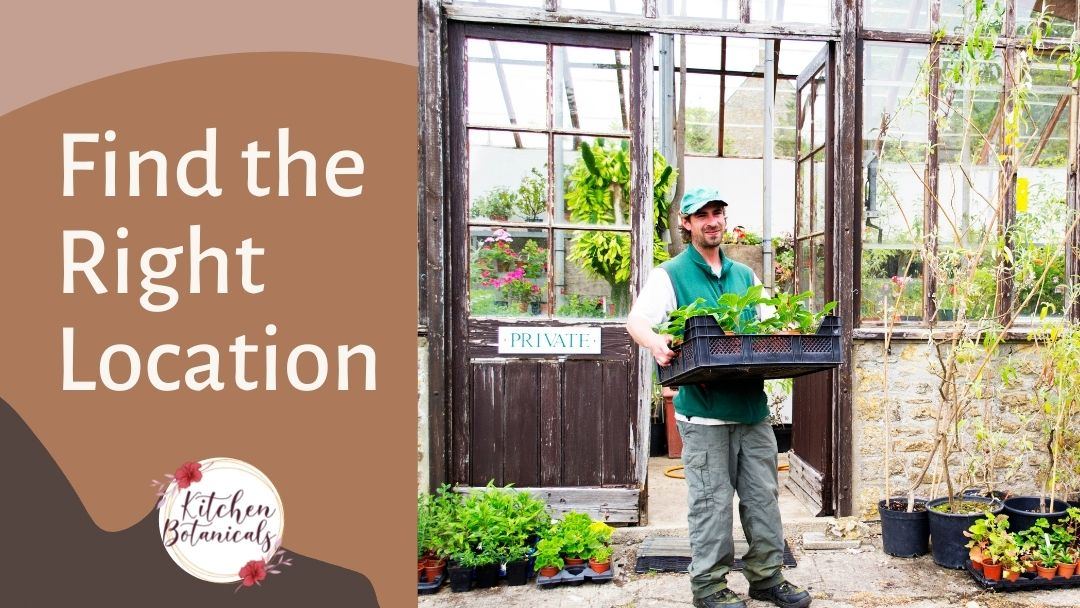 Find the right location when growing vegetables in Florida - Kitchen Botanicals