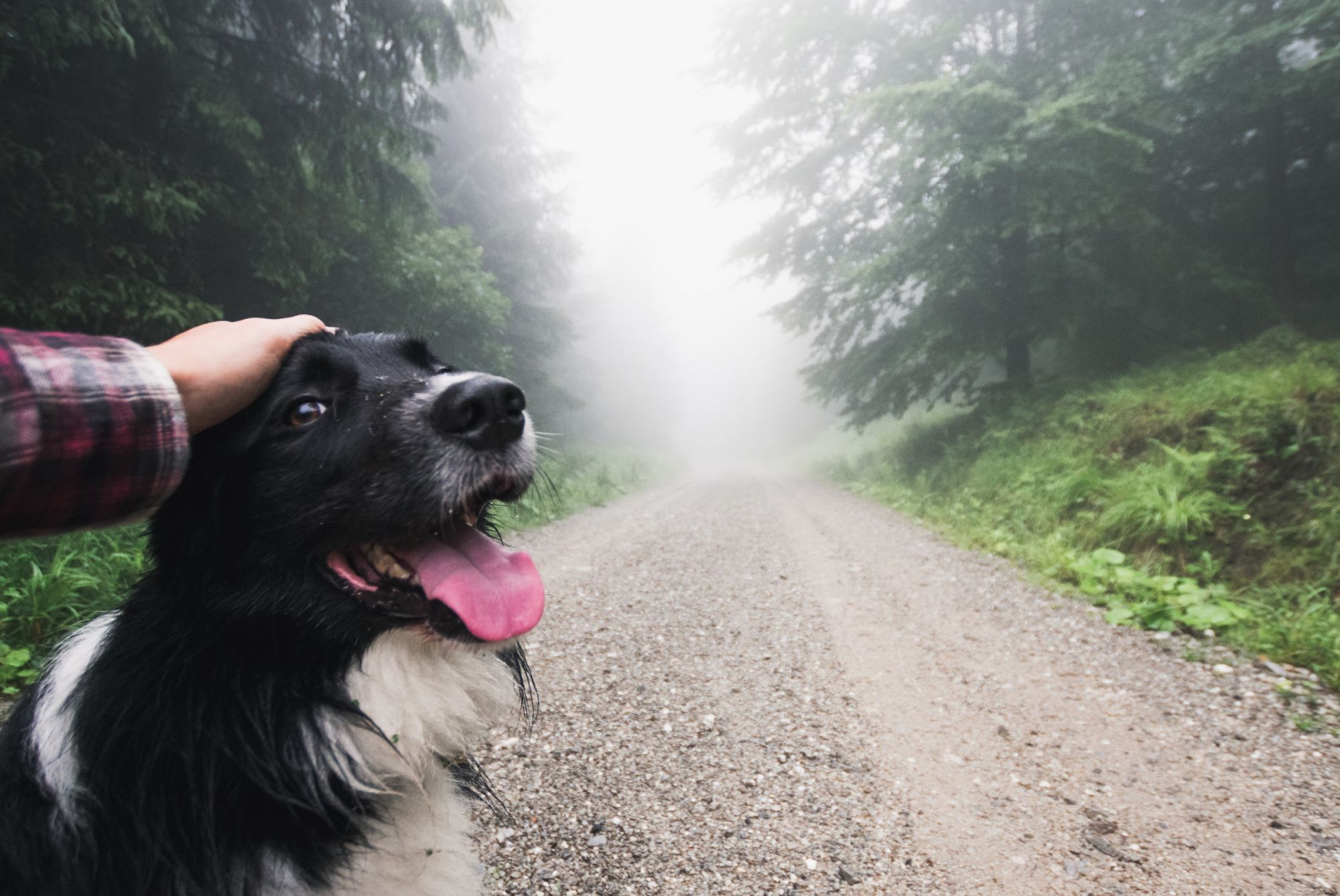 A misty morning walk will keep your dog cool.