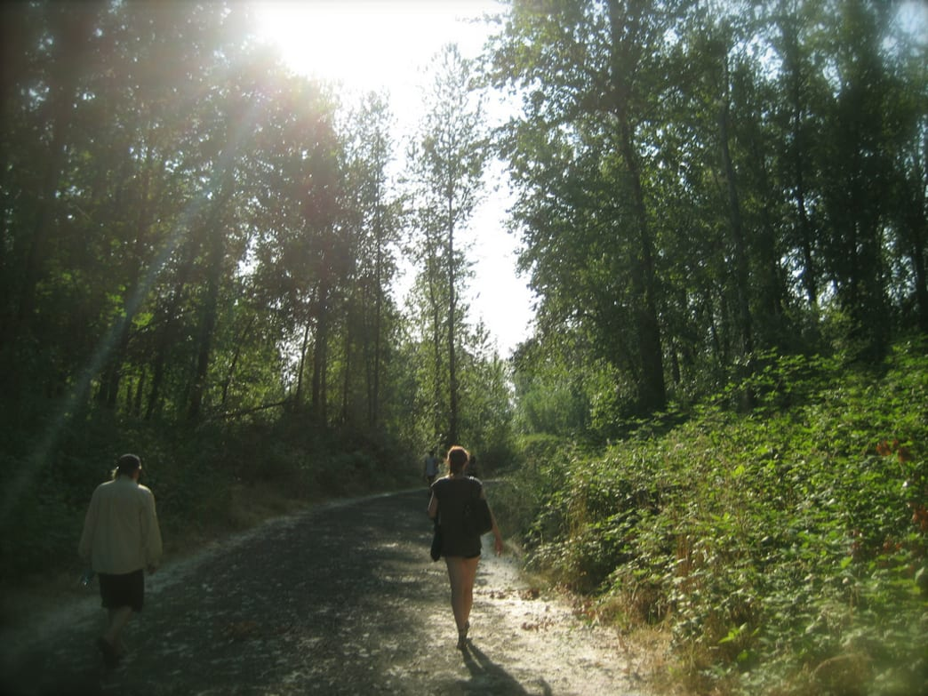 An easy summertime stroll along the sunwrecked trails of Sauvie Island
