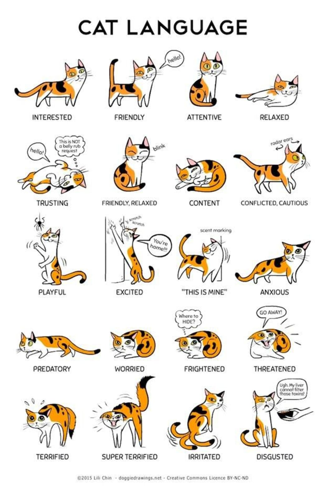 Cats' emotions can be deciphered through their different behaviors.