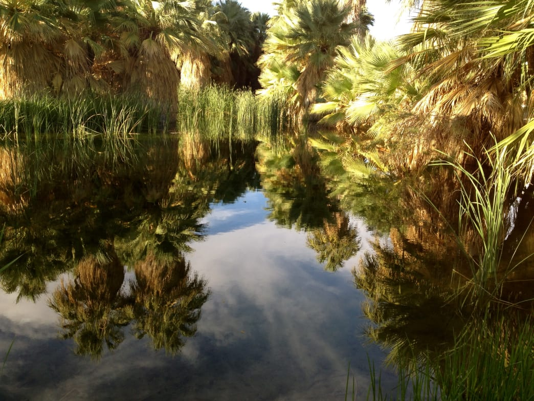 The Coachella Valley is home to the Thousand Palm Oasis, and impressive display of green in the desert.