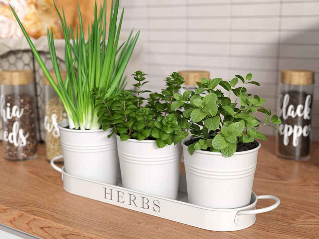 These cute metal pots have hidden drill holes to drain away extra water.
