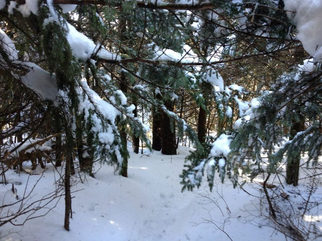 Snow covered trails make traction and navigation a bit tricky
