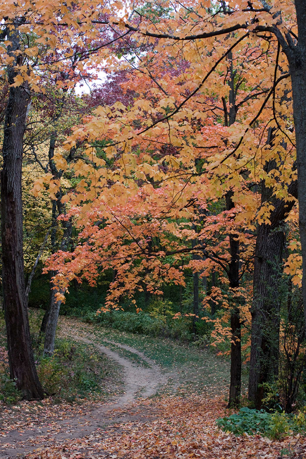 It's tough to beat Kettle Moraine in the fall.