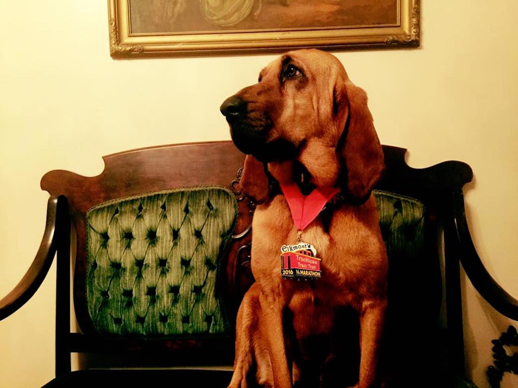 Ludivine is the bloodhound that Elkmont's Hound Dog Half Marathon is named after.