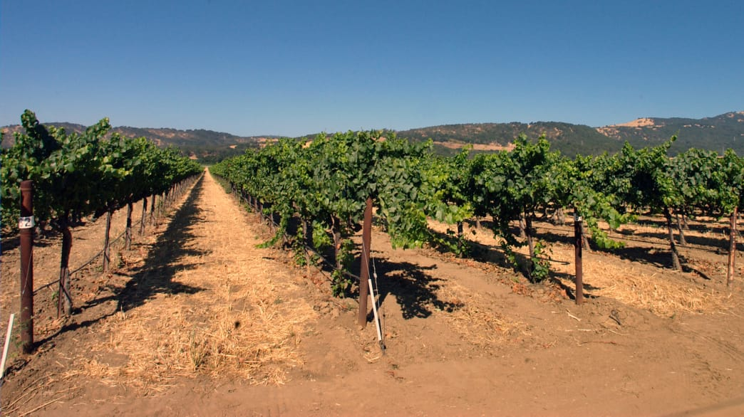 The Suisun Valley has a long tradition of winemaking.