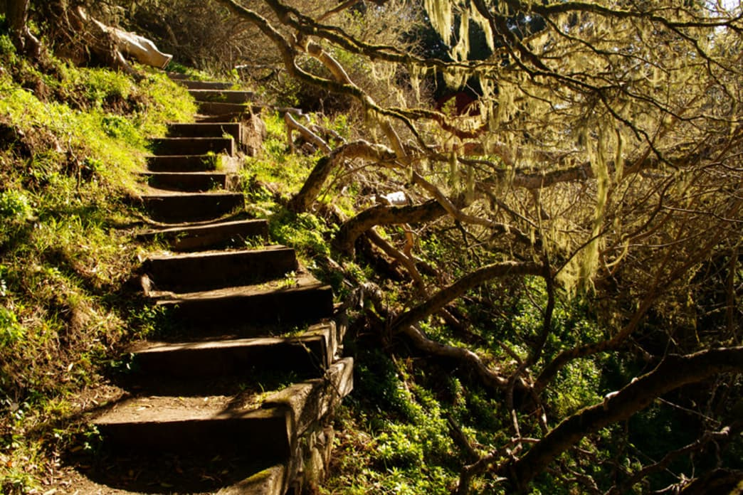 A mossy staircase on the Matt Davis trail