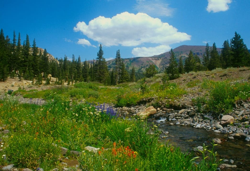 The Western States Race passes through Emigrant Wilderness.
