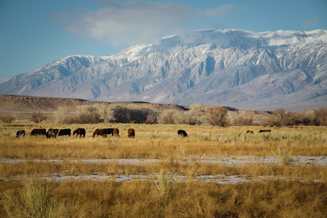 The Eastern Sierra rise out of the Owens Valley