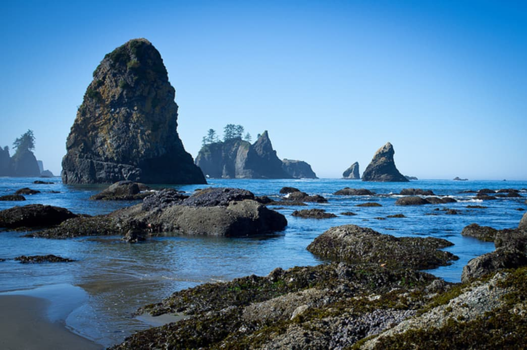 Outlandish rocky spires rise out of the water at Shi Shi Beach.
