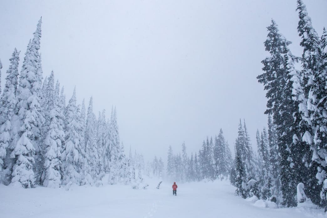 Whiteout at Mount Rainier National Park