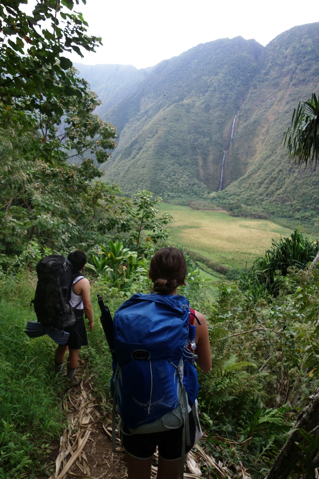 Taking in the views of Waimanu Valley from the Muliwai Trail.     Laura Lancaster