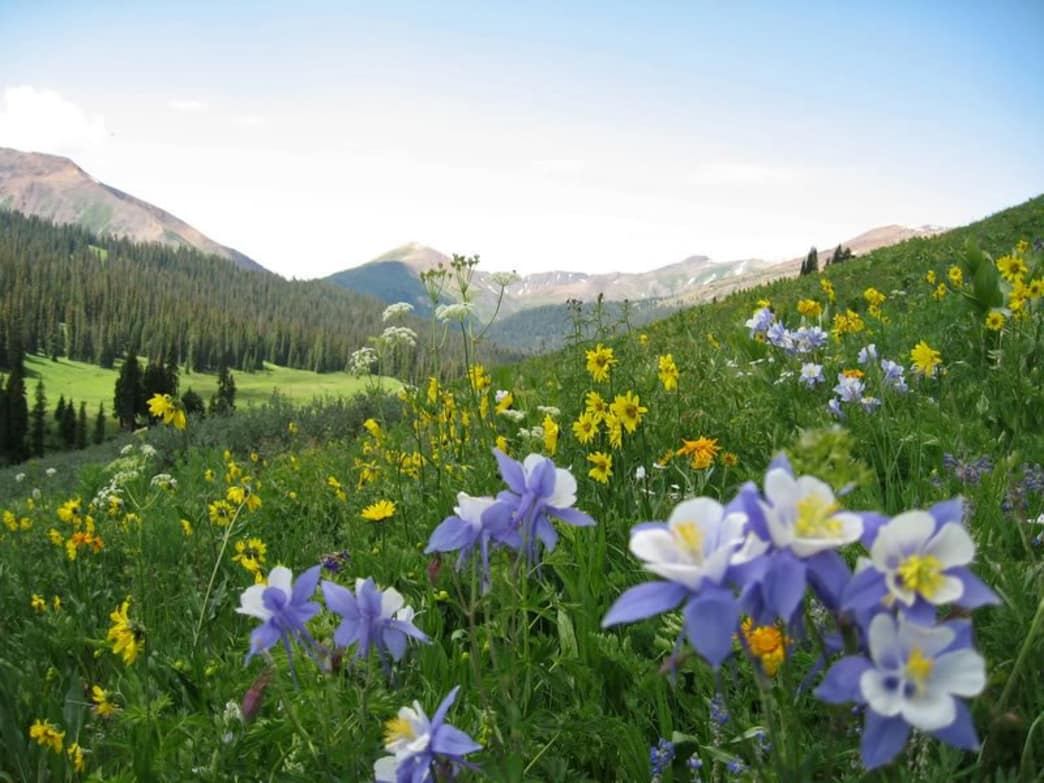 Aspen to Crested Butte wildflowers