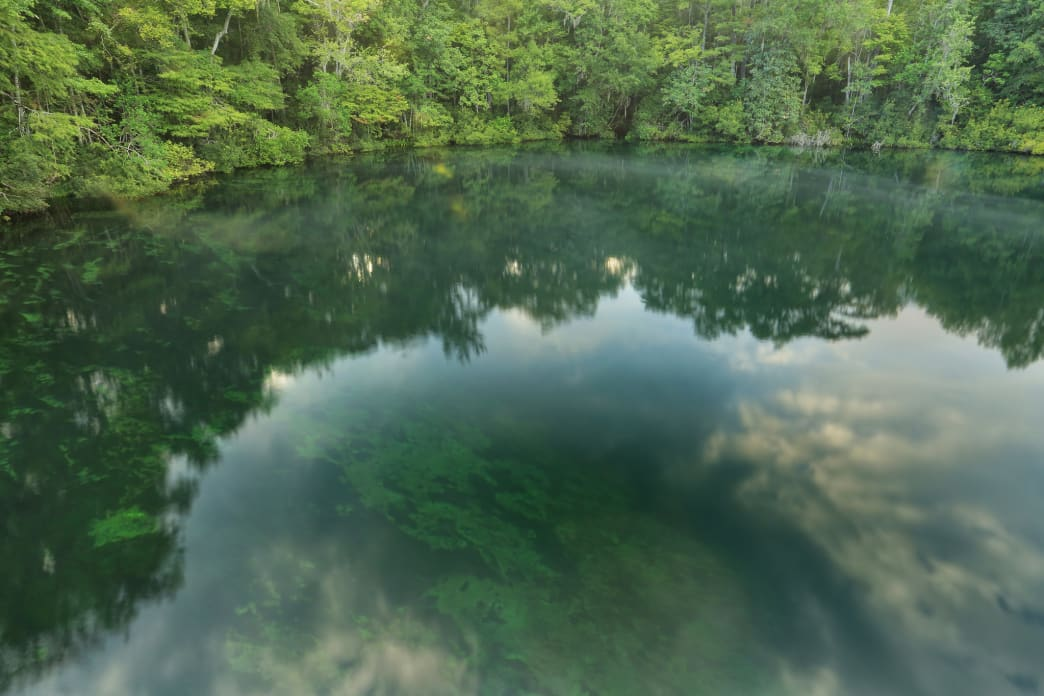 Wakulla Springs State Park features one of the largest and deepest freshwater springs in the world.
