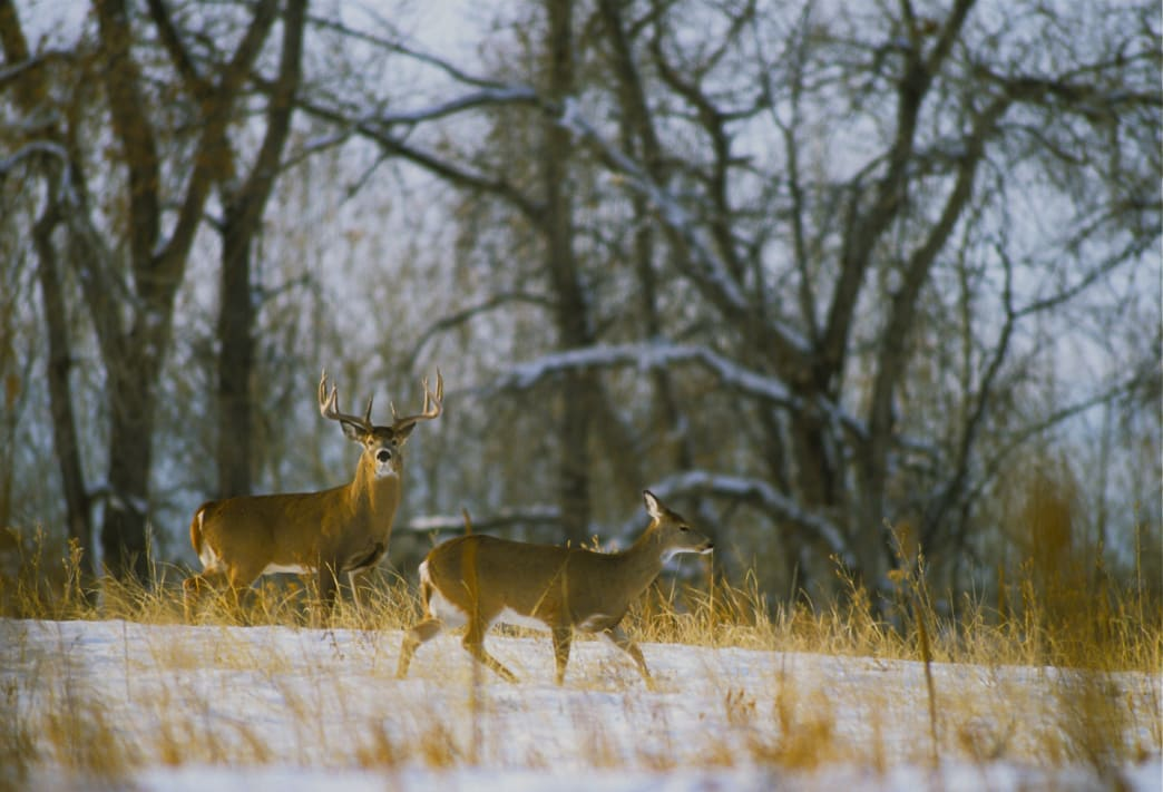 Watch the weather, when temperatures are low during the day, deer will be on the move.
