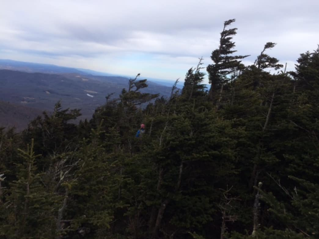 Constant wind gives spruce trees and odd appearance of forward motion