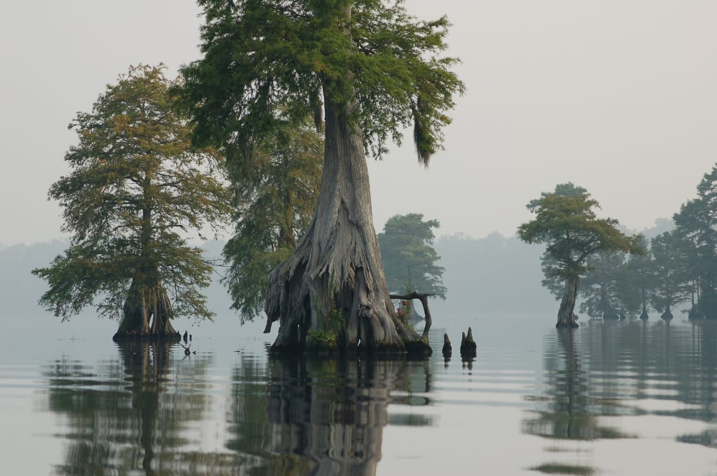 The iconic Great Dismal Swamp National Wildlife Refuge, home to Lake Drummond, one of only two natural lakes in Virginia.