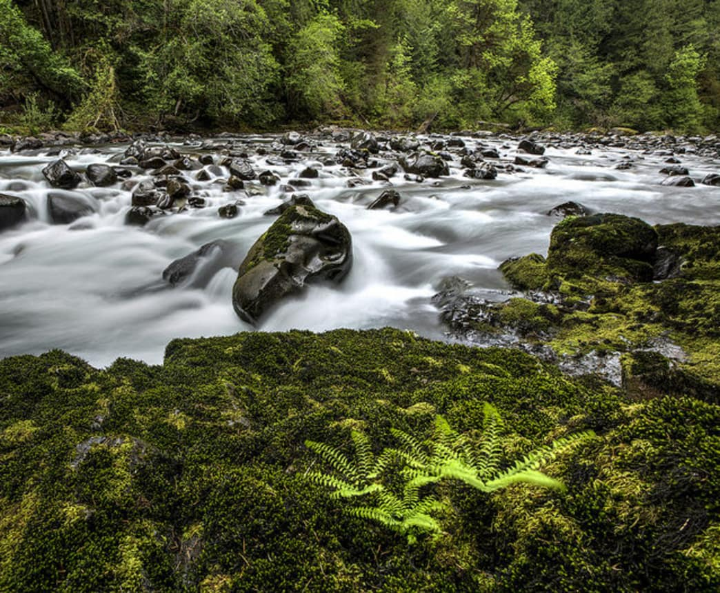 Shady Cove Campground sits along the banks of Little North Santiam River.