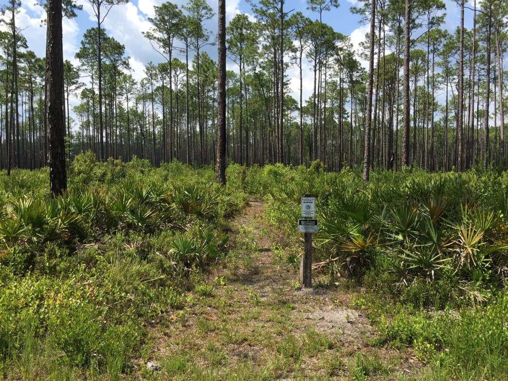 Florida National Trail - Best Hikes in US