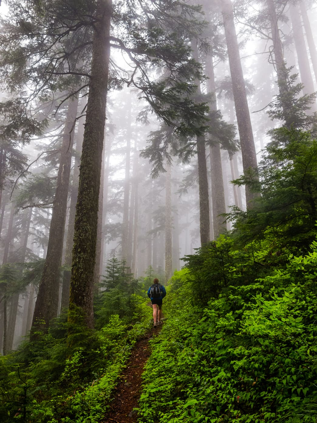 Hiking through the Oregon forest from the Wahtum Lake Trailhead