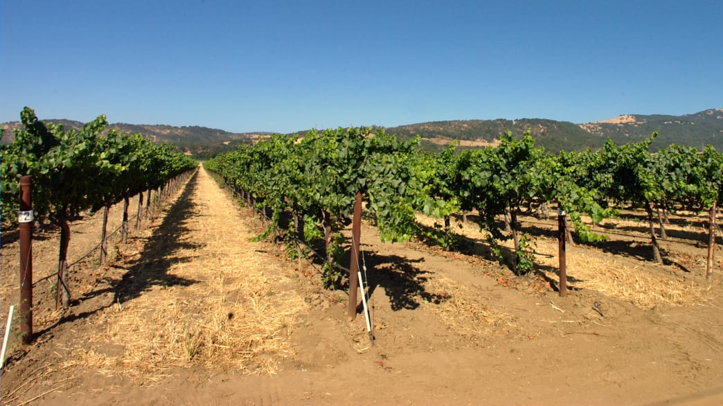 If you're looking to ride through wine country, try this Solano Loop.