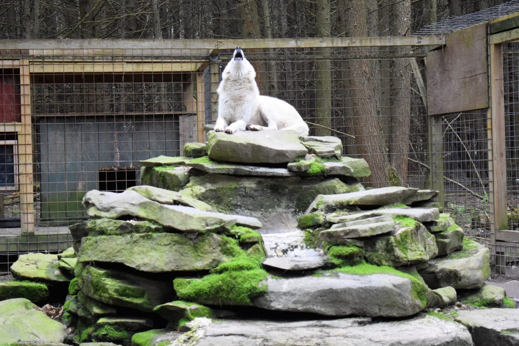Claws 'N' Paws has a wide variety of wild animals in the Poconos