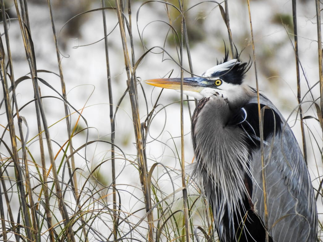 More than 430 bird species have been spotted in Alabama.