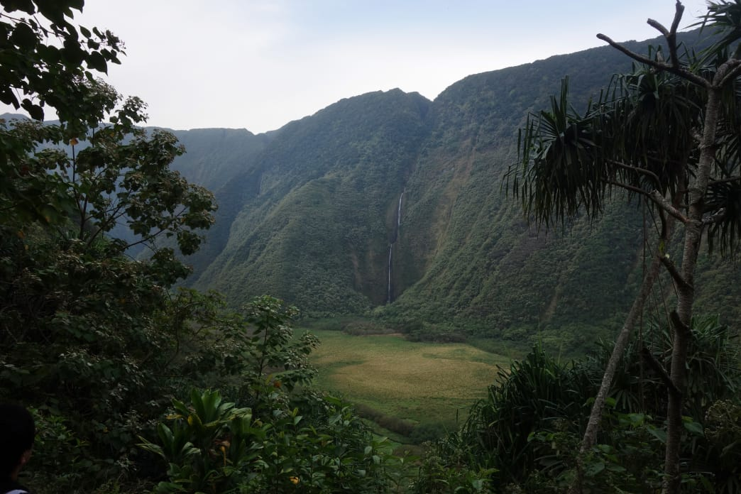 Waimanu Valley from the Muliwai Trail.     Laura Lancaster