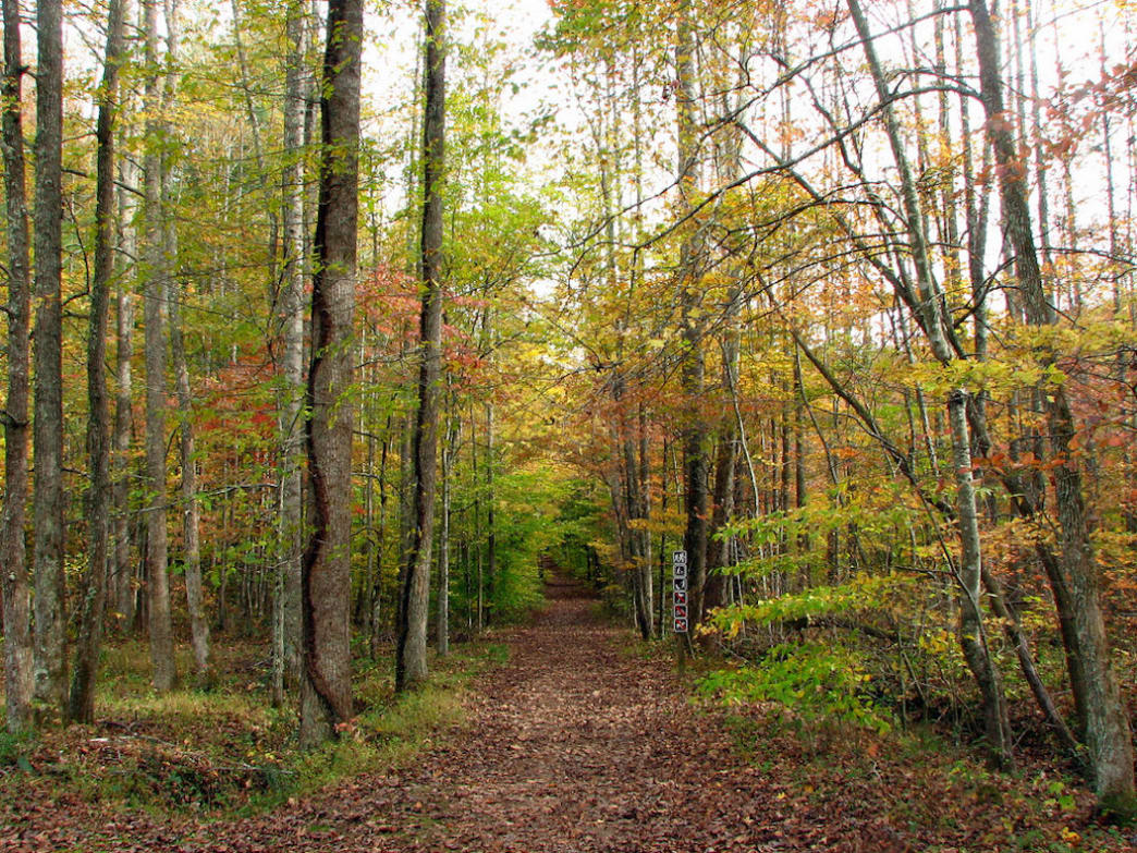 No two trails are alike at Frozen Head State Park and Natural Area.