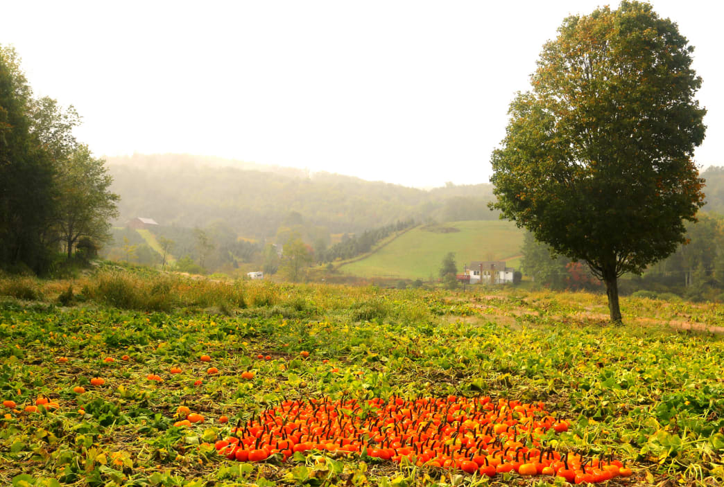 Pumpkin patch along the Virginia Creeper Trail, one of the area's best options for cyclists.