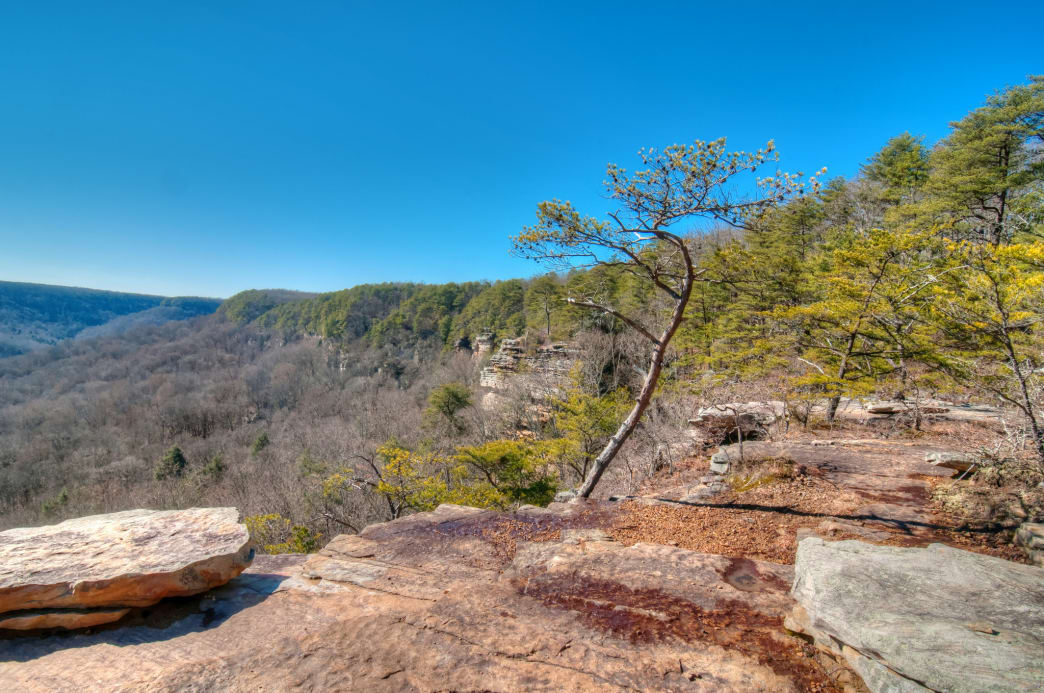 Savage Gulf has more than 50 miles of trails that lead to expansive views and rushing waterfalls.