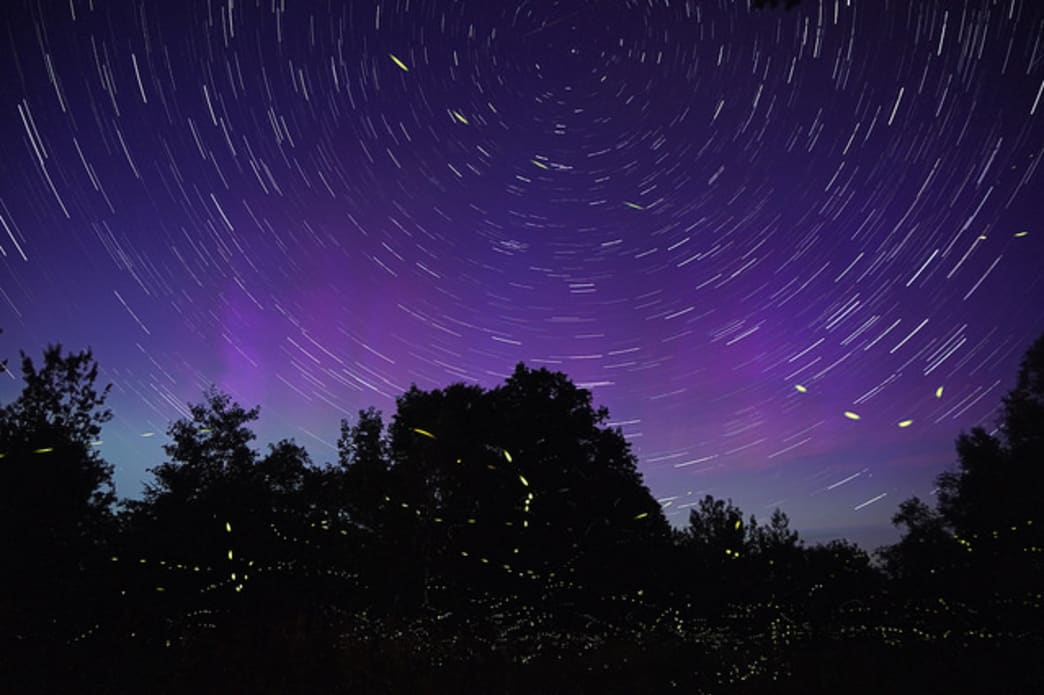 Stars And Fireflies In Spinning Night Sky