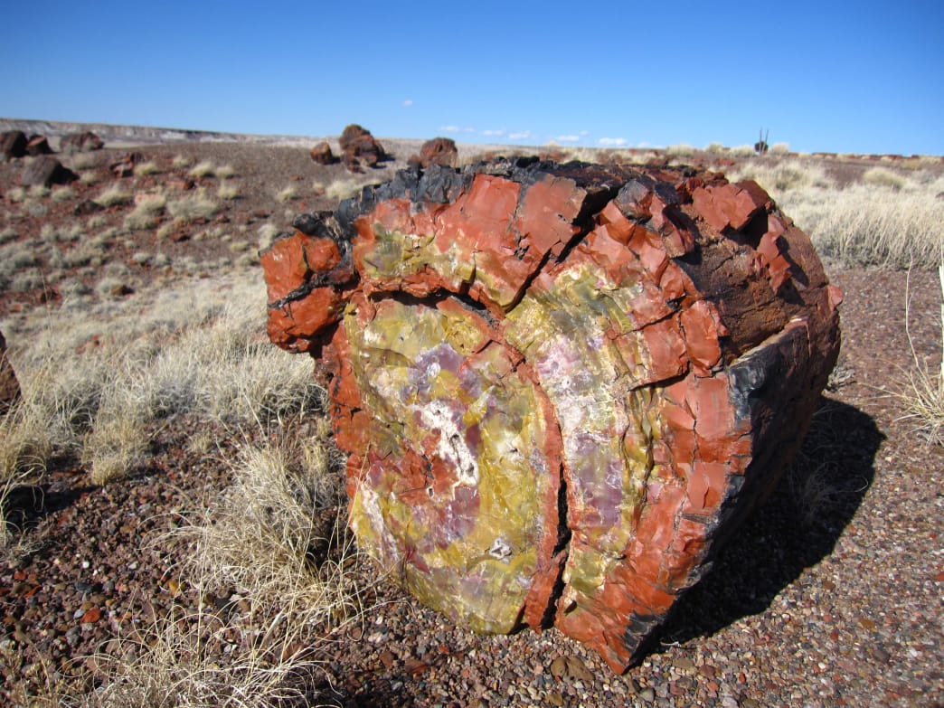 The beautiful colors of petrified wood.