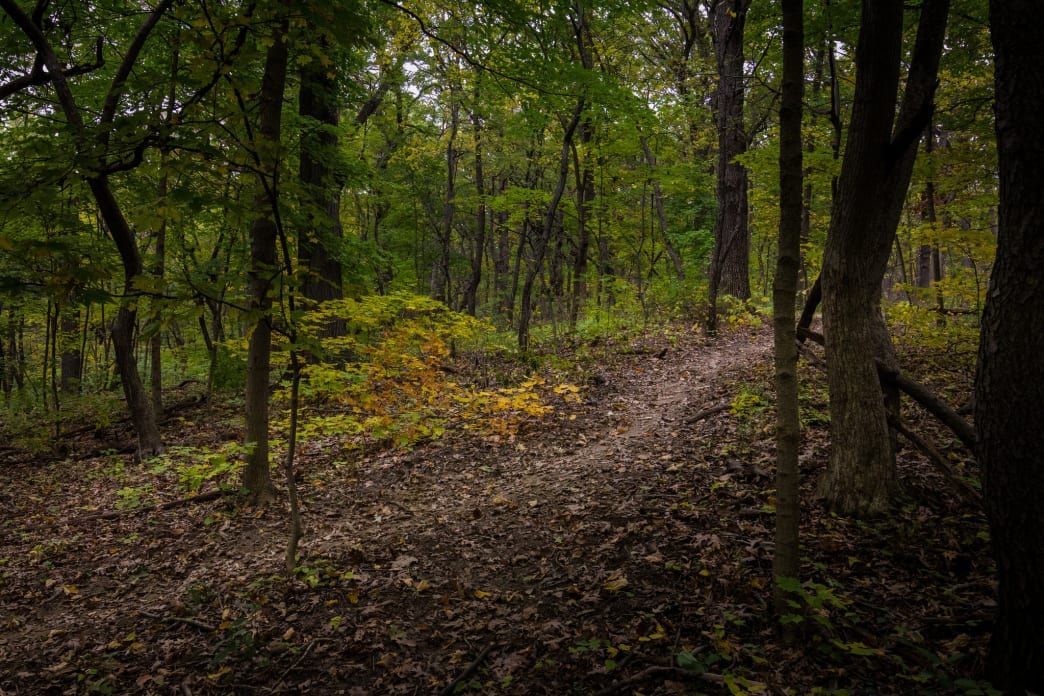 The Palos Trail System offers the best trail running  in the Chicago area.