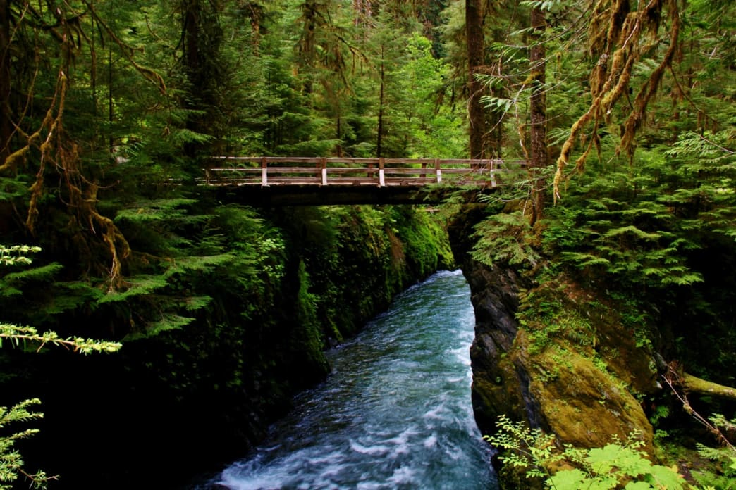 A fairy tale bridge in the Enchanted Valley of Olympic National Park