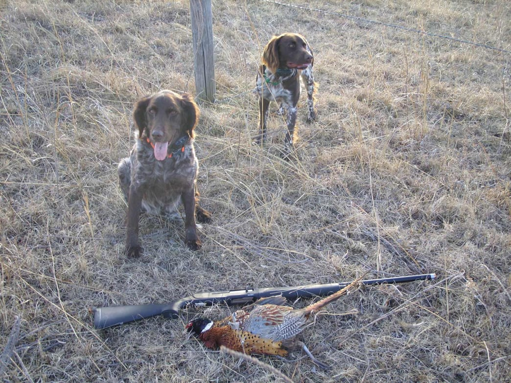 The author's dogs, Phantom and Komet pose with the rewards of an afternoon hunt.