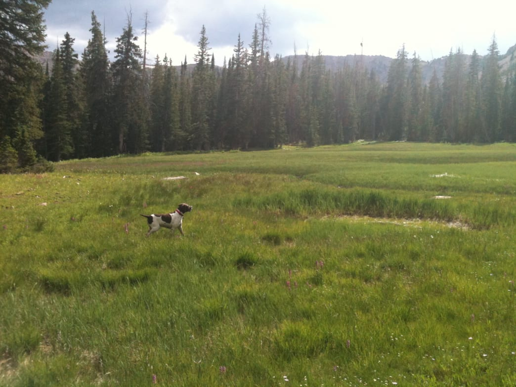 It's a dog's life in the Uintas.
