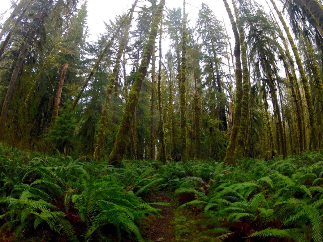 One of the most underrated forests in the region