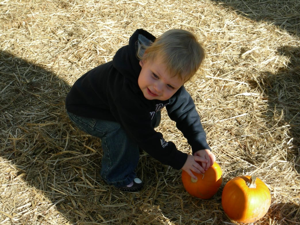 There are just too many choices! Kids get to pick their own pumpkin at the 4D Family Farm Corn Maze.