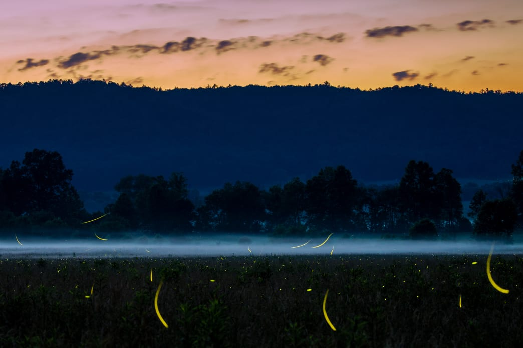 Plan your trip for a chance to see the synchronous fireflies at the park.