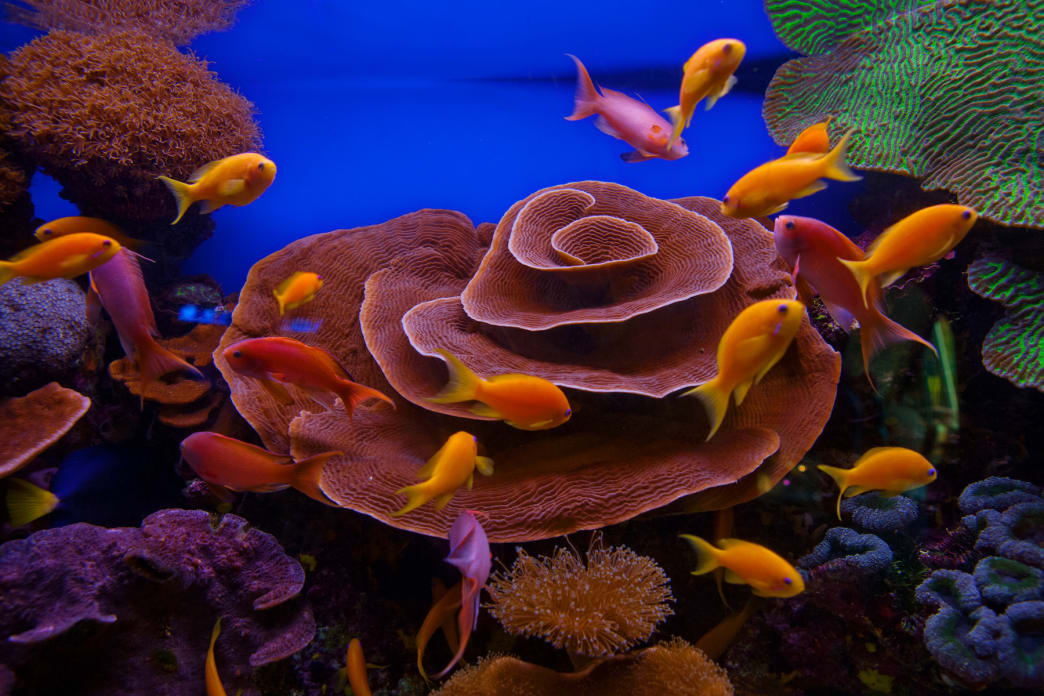 Hundreds of tropical fish swim among the coral reefs of the Red Sea.