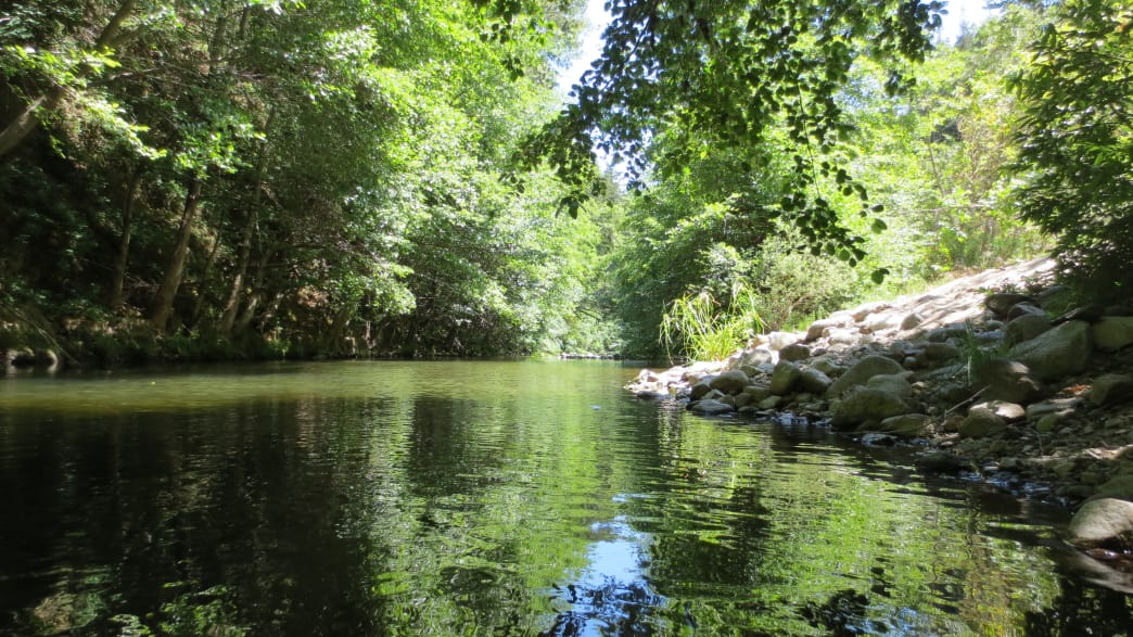 The San Lorenzo River flows through Henry Cowell State Park.