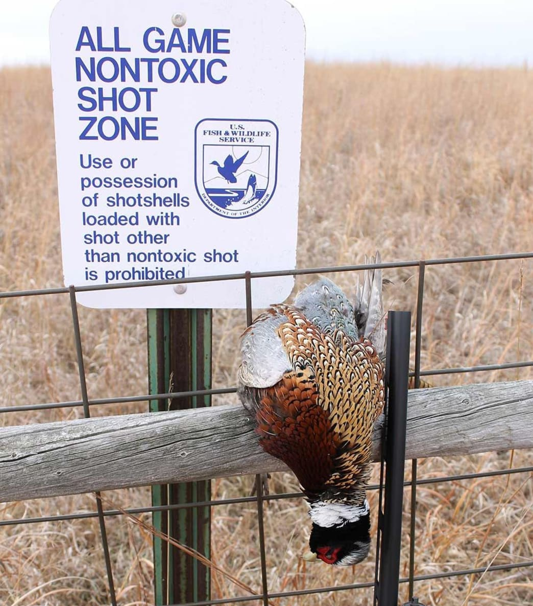 Waterfowl Production Areas are great places to find late-season roosters, especially after the crowds have thinned and the water has frozen.