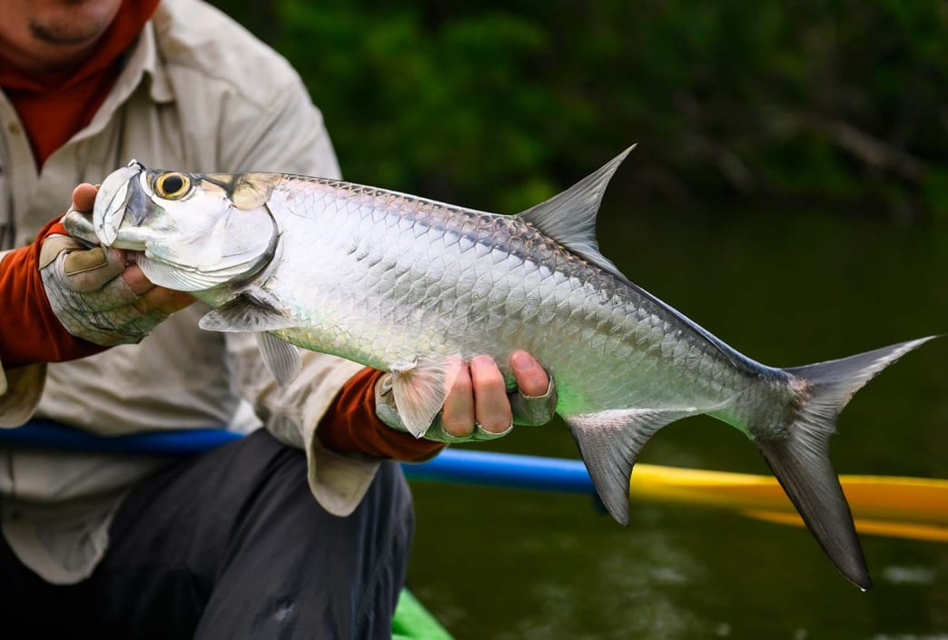 The tarpon bite was slower than the crew had hoped, but Nate Matthews managed to land this juvie silver king.