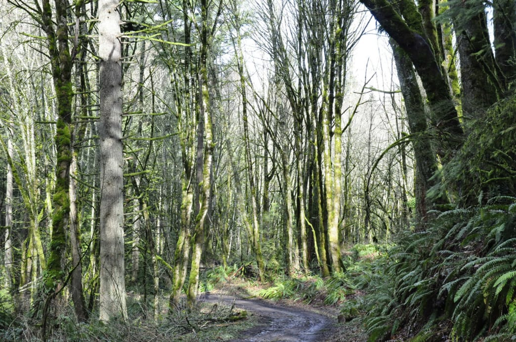 Forest Park offers a whopping 28 miles of easily accessible trails open to mountain bikers