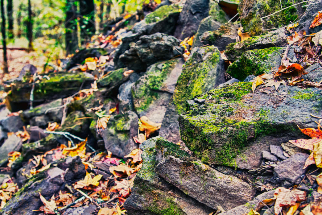 Moss-covered rocks adorn the trails of Red Mountain Park.